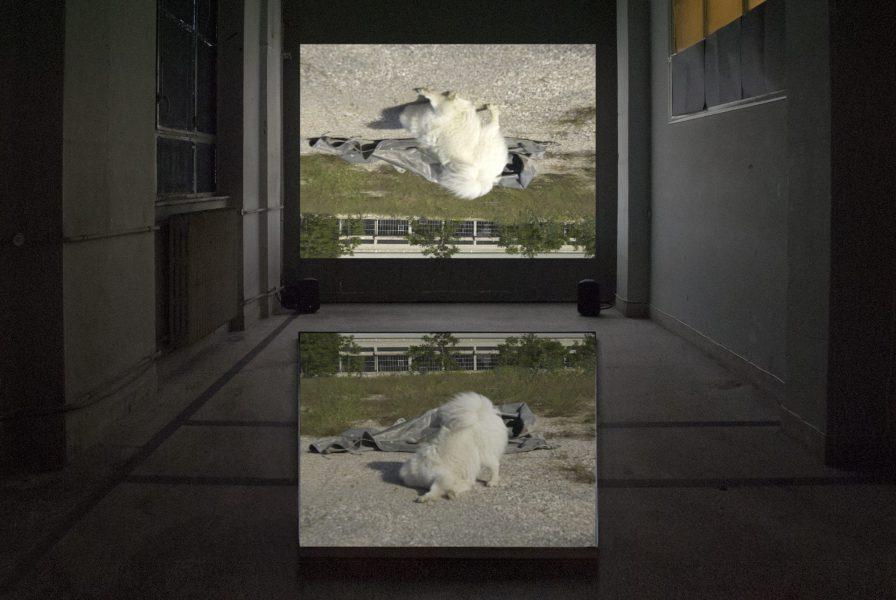 Feral Remnants (Dog), 2017
