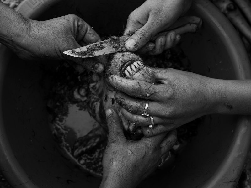 Two women clean the lamb's head. Lesvos, Greece, The Island, 2020
