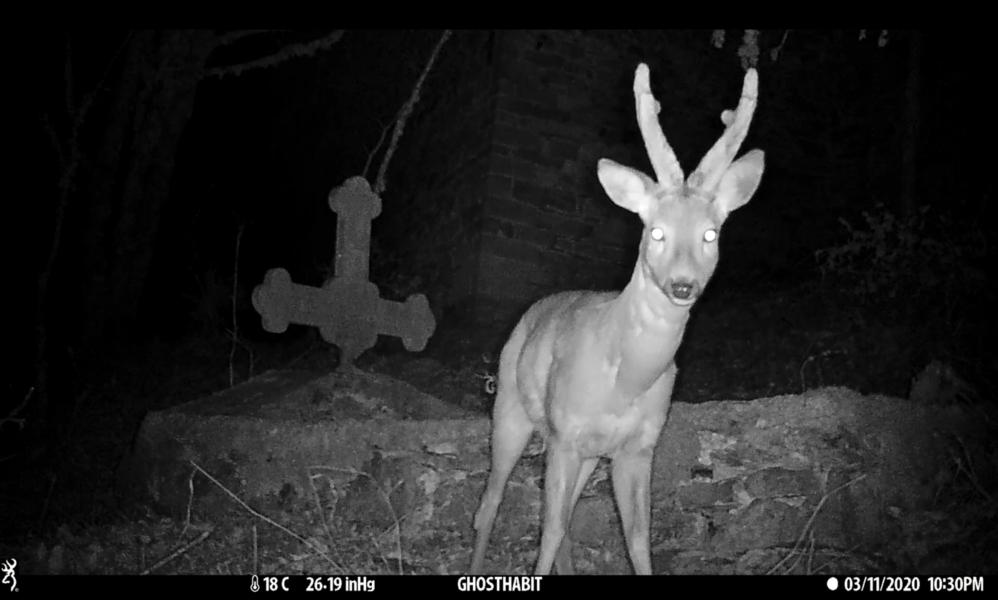 Ghost Habitats-Traps, 2021